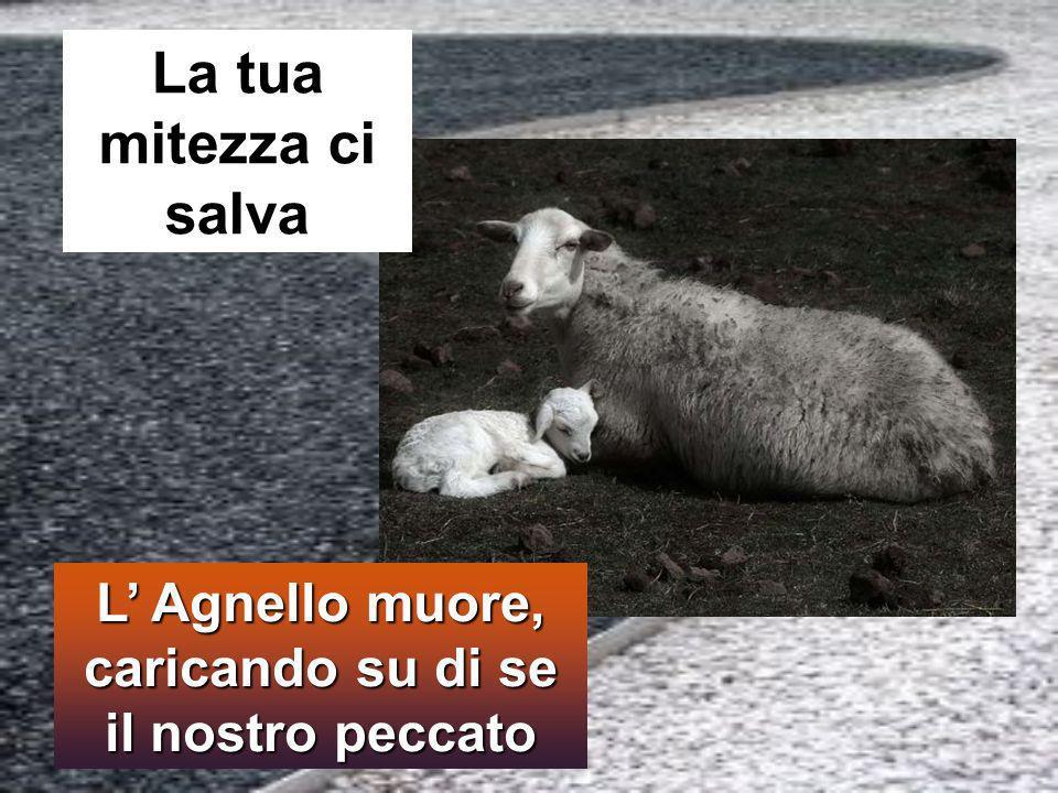 L Agnello muore, caricando su di se il nostro peccato La tua mitezza ci salva