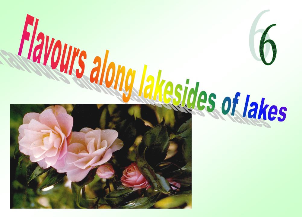 There are 150 kinds of CAMELLIAS, in various colours, White, Cream Red, Yellow Pink, Fucsia, in many shades.