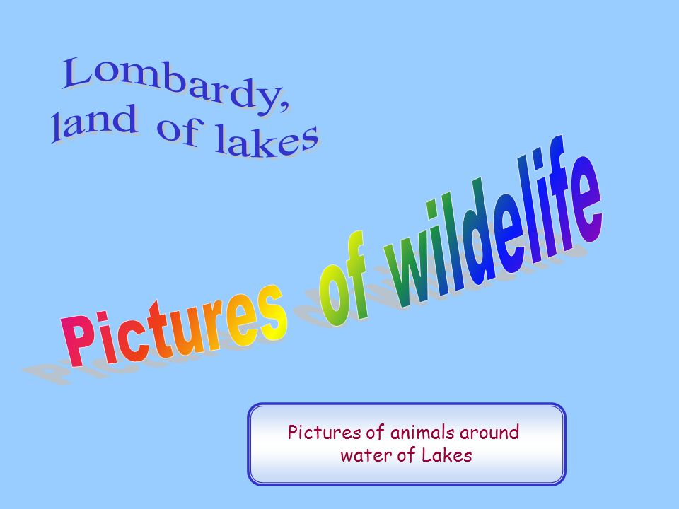 Pictures of animals around water of Lakes