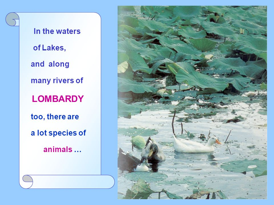 In the waters of Lakes, and along many rivers of LOMBARDY too, there are a lot species of animals …