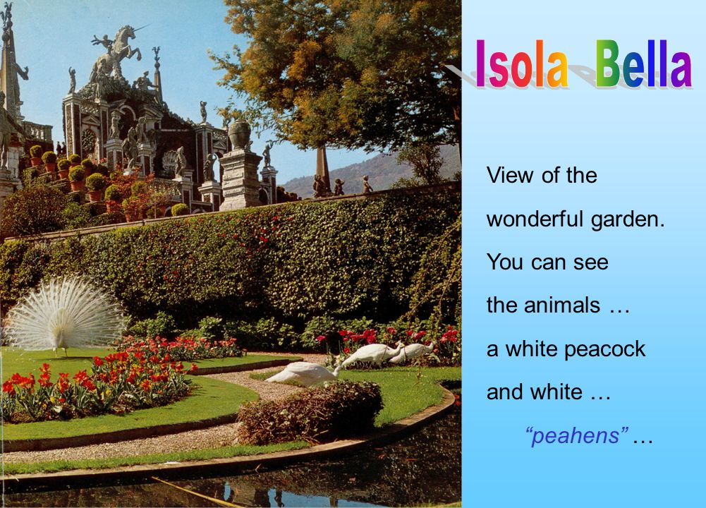 View of the wonderful garden. You can see the animals … a white peacock and white … peahens …