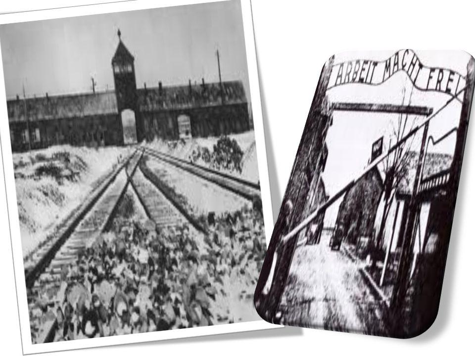 Gli ebrei, nella scala sociale del campo, erano all ultimo posto e ricevevano il peggior trattamento.