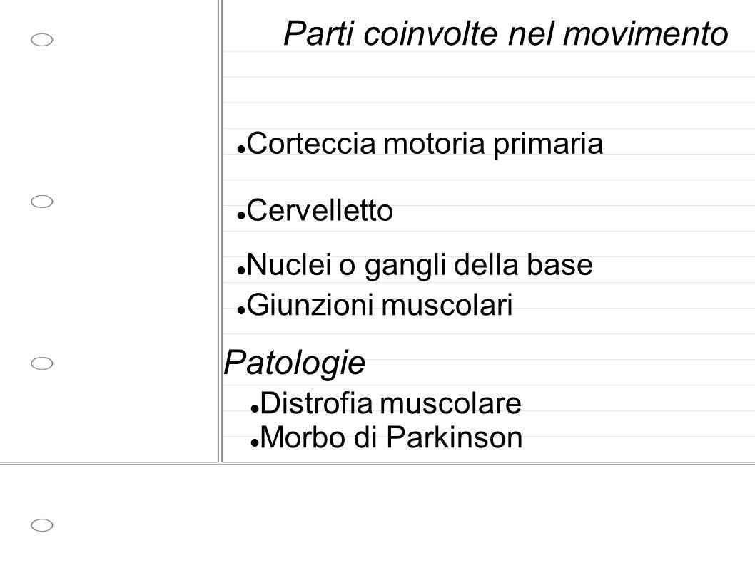 Parti coinvolte nel movimento Corteccia motoria primaria Cervelletto Nuclei o gangli della base Giunzioni muscolari Patologie Distrofia muscolare Morbo di Parkinson