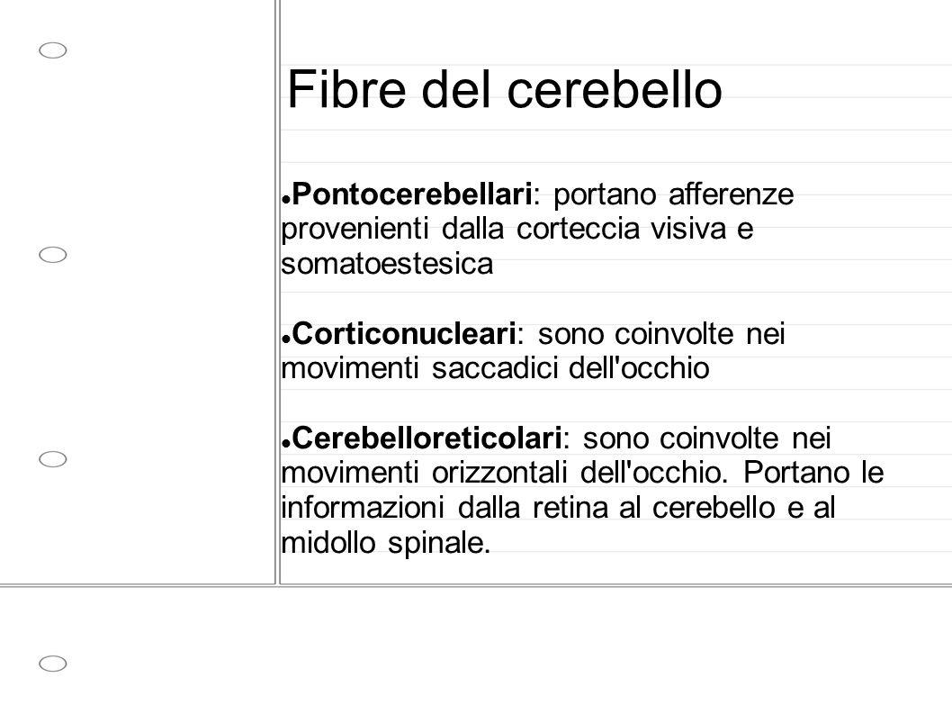 Fibre del cerebello Pontocerebellari: portano afferenze provenienti dalla corteccia visiva e somatoestesica Corticonucleari: sono coinvolte nei movime