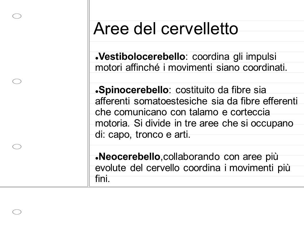Aree del cervelletto Vestibolocerebello: coordina gli impulsi motori affinché i movimenti siano coordinati. Spinocerebello: costituito da fibre sia af