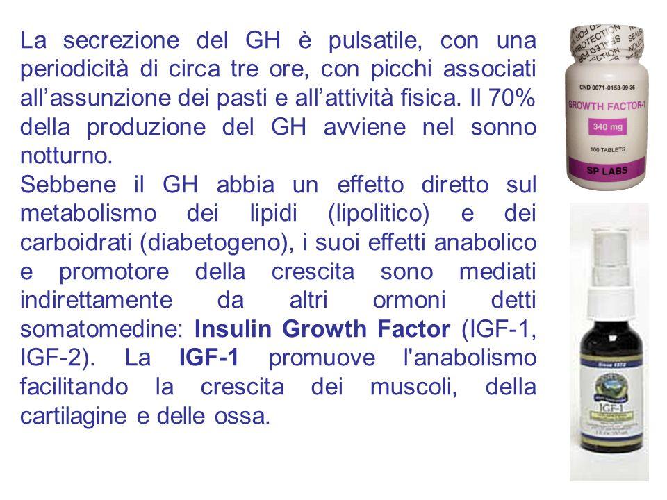 La secrezione del GH è pulsatile, con una periodicità di circa tre ore, con picchi associati allassunzione dei pasti e allattività fisica. Il 70% dell