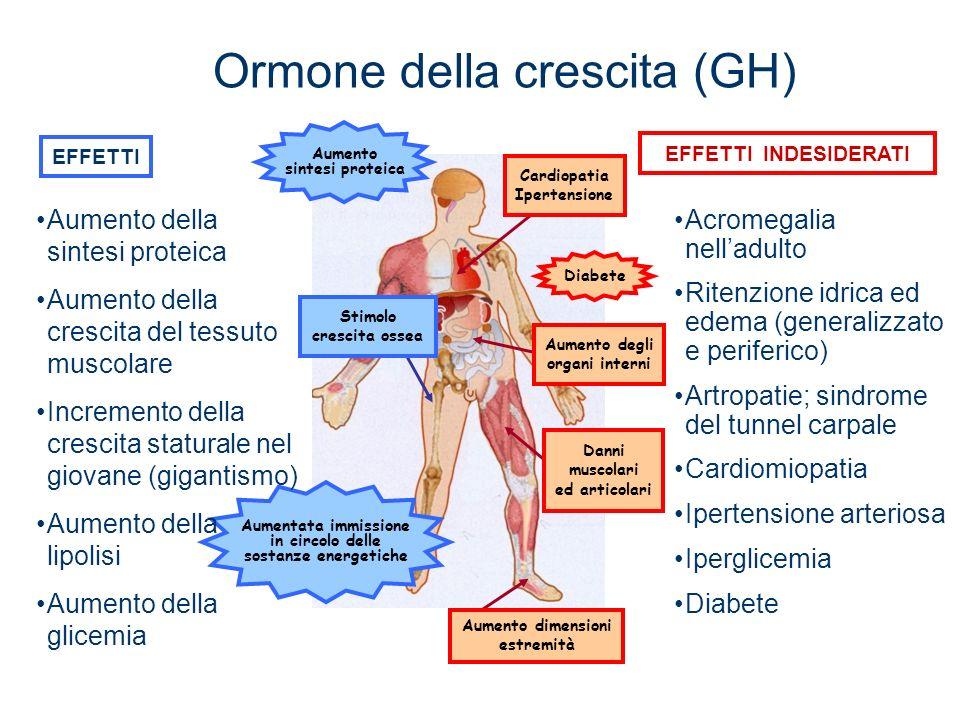 Aumento sintesi proteica Aumentata immissione in circolo delle sostanze energetiche Cardiopatia Ipertensione Danni muscolari ed articolari Aumento del