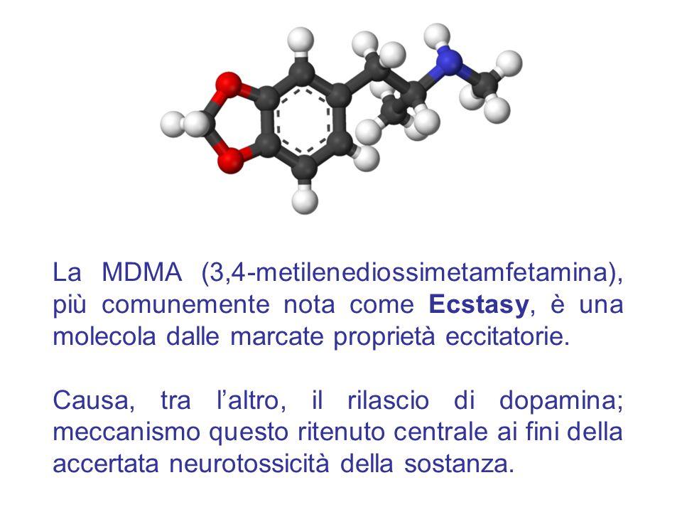 La MDMA (3,4-metilenediossimetamfetamina), più comunemente nota come Ecstasy, è una molecola dalle marcate proprietà eccitatorie. Causa, tra laltro, i