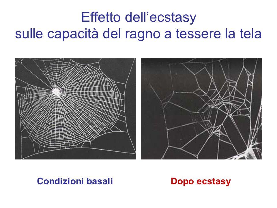 Effetto dellecstasy sulle capacità del ragno a tessere la tela Dopo ecstasyCondizioni basali