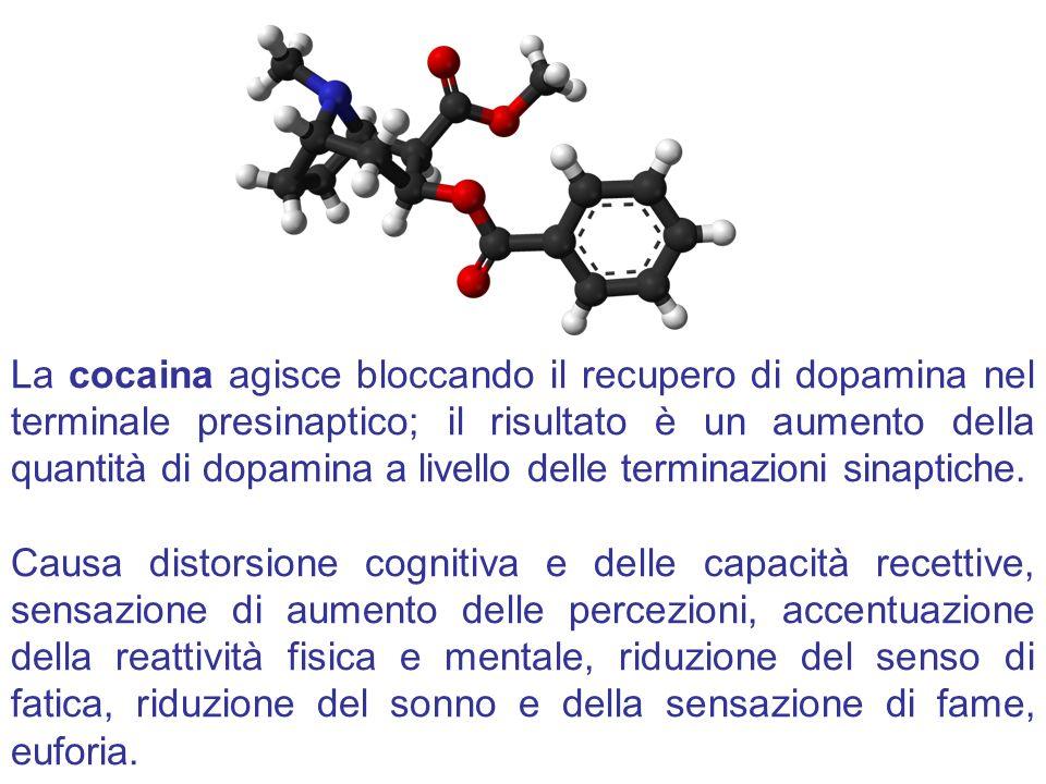 La cocaina agisce bloccando il recupero di dopamina nel terminale presinaptico; il risultato è un aumento della quantità di dopamina a livello delle t