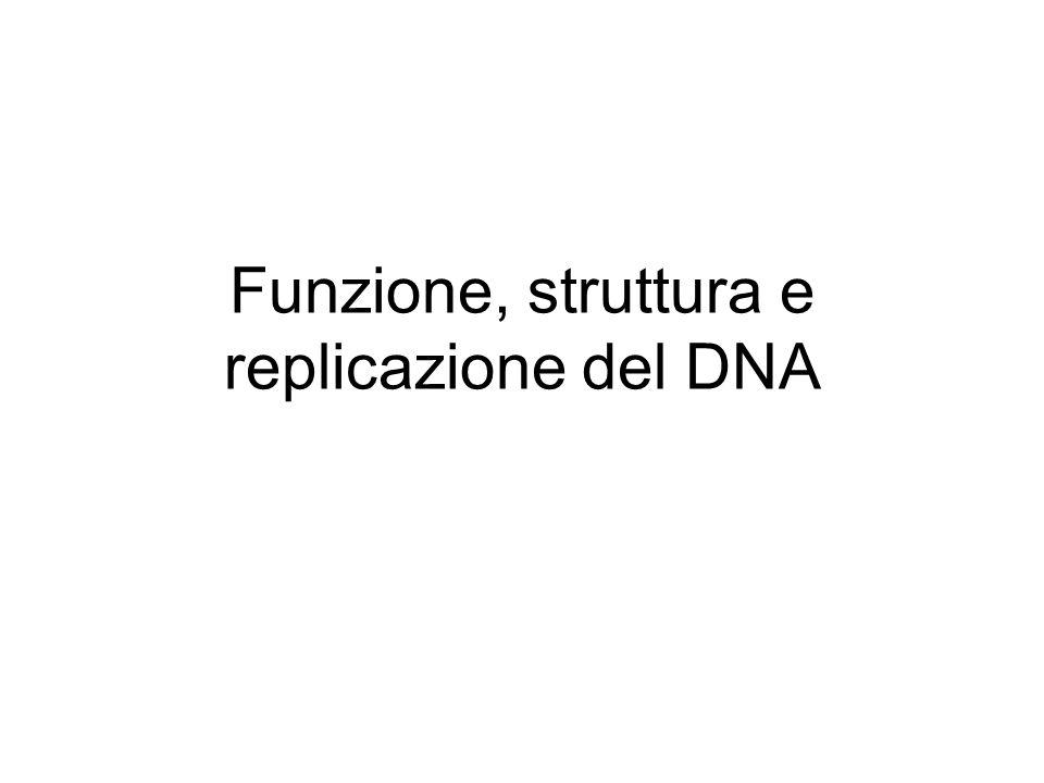 Funzione, struttura e replicazione del DNA