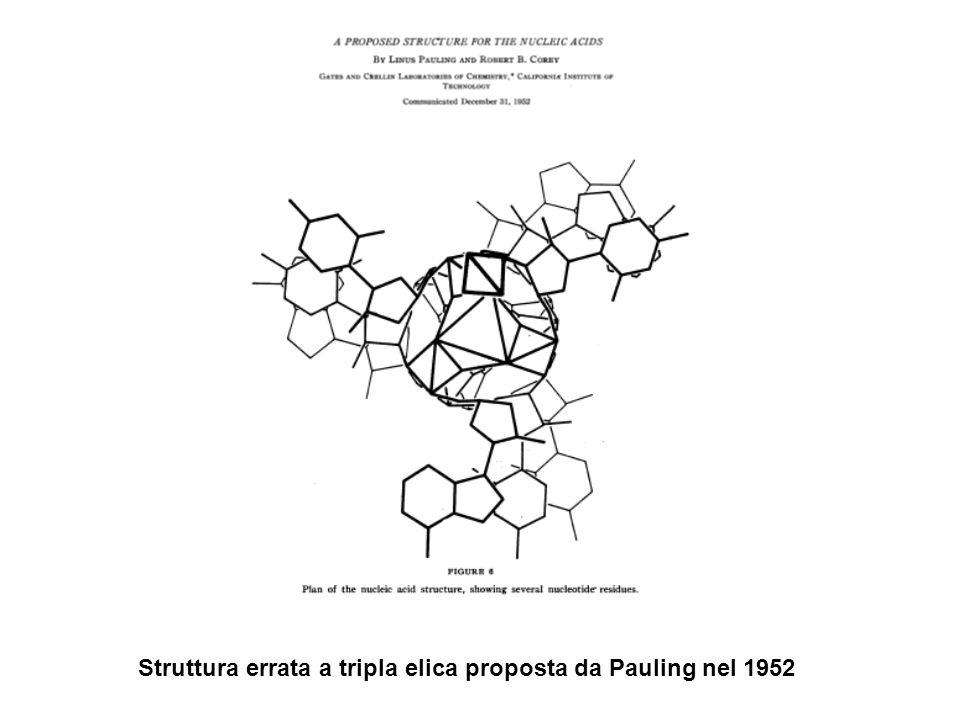 Struttura errata a tripla elica proposta da Pauling nel 1952