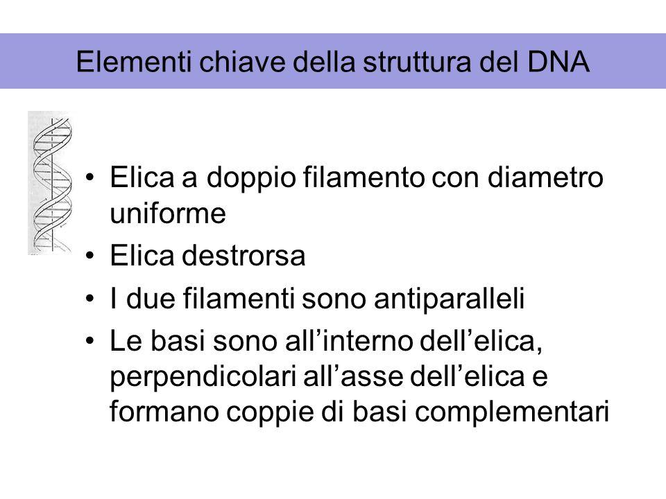 Elementi chiave della struttura del DNA Elica a doppio filamento con diametro uniforme Elica destrorsa I due filamenti sono antiparalleli Le basi sono