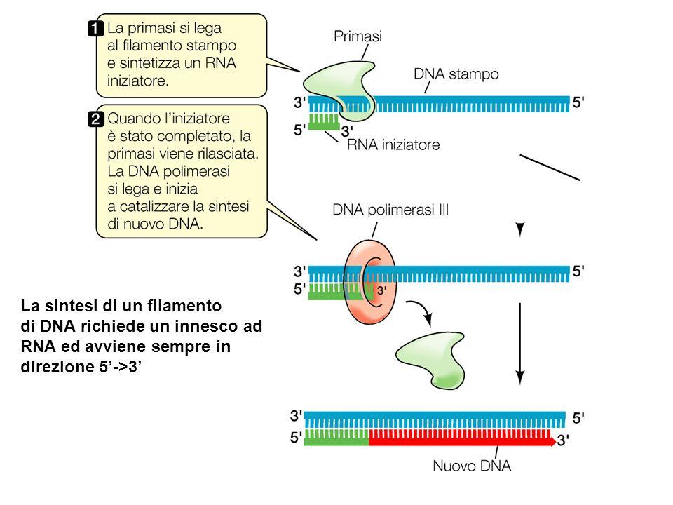 La sintesi di un filamento di DNA richiede un innesco ad RNA ed avviene sempre in direzione 5->3