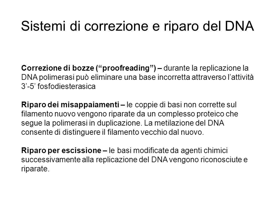 Sistemi di correzione e riparo del DNA Correzione di bozze (proofreading) – durante la replicazione la DNA polimerasi può eliminare una base incorrett