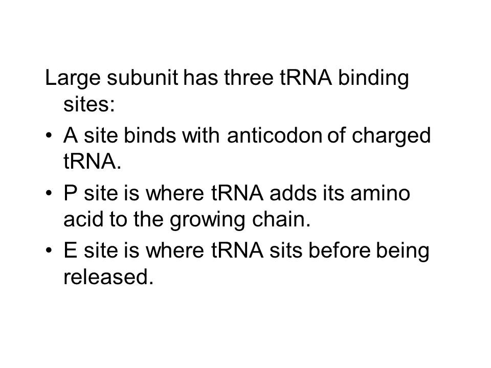 Large subunit has three tRNA binding sites: A site binds with anticodon of charged tRNA.