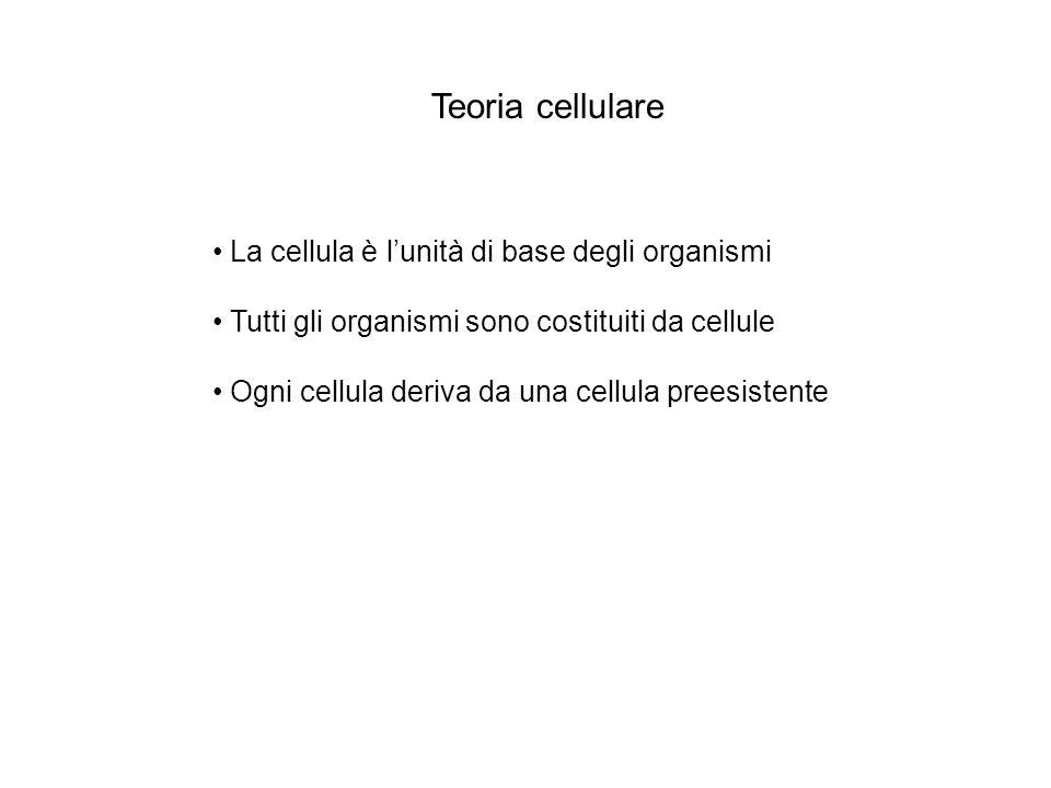 Teoria cellulare La cellula è lunità di base degli organismi Tutti gli organismi sono costituiti da cellule Ogni cellula deriva da una cellula preesis
