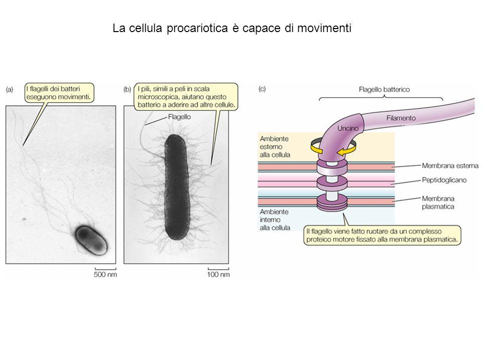 Figure 4.7 Eukaryotic CellsPlant Cells (Part 4)