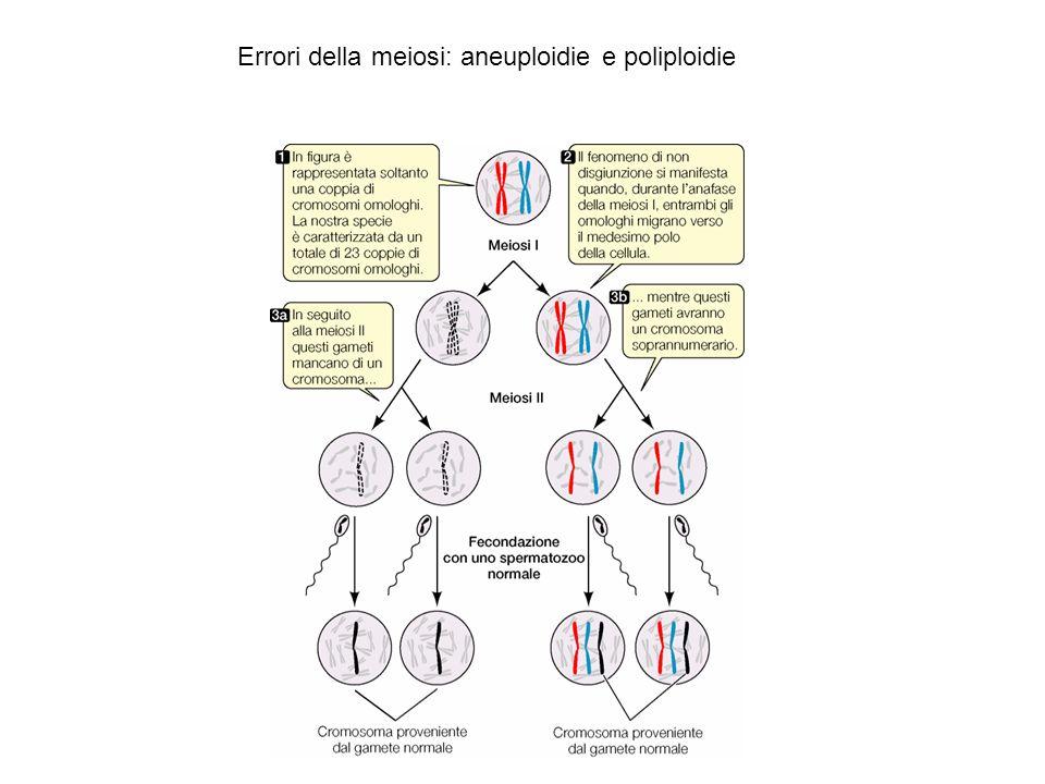 Errori della meiosi: aneuploidie e poliploidie