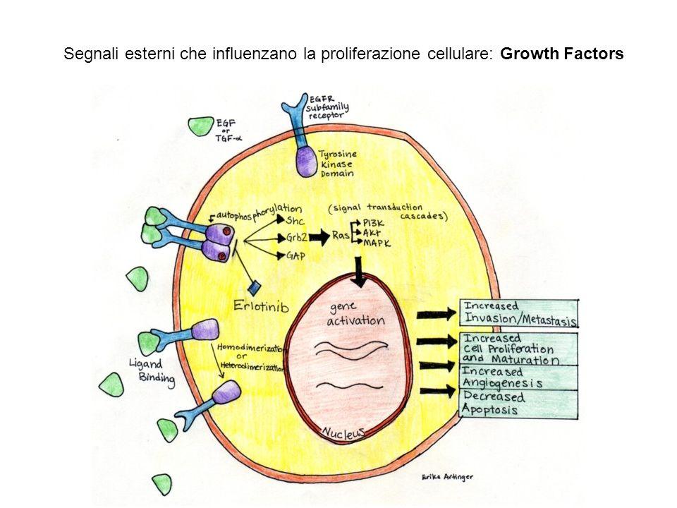Segnali esterni che influenzano la proliferazione cellulare: Growth Factors