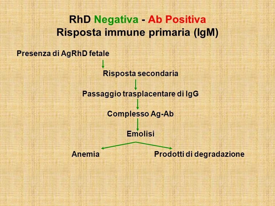 RhD Negativa - Ab Positiva Risposta immune primaria (IgM) Presenza di AgRhD fetale Risposta secondaria Passaggio trasplacentare di IgG Complesso Ag-Ab