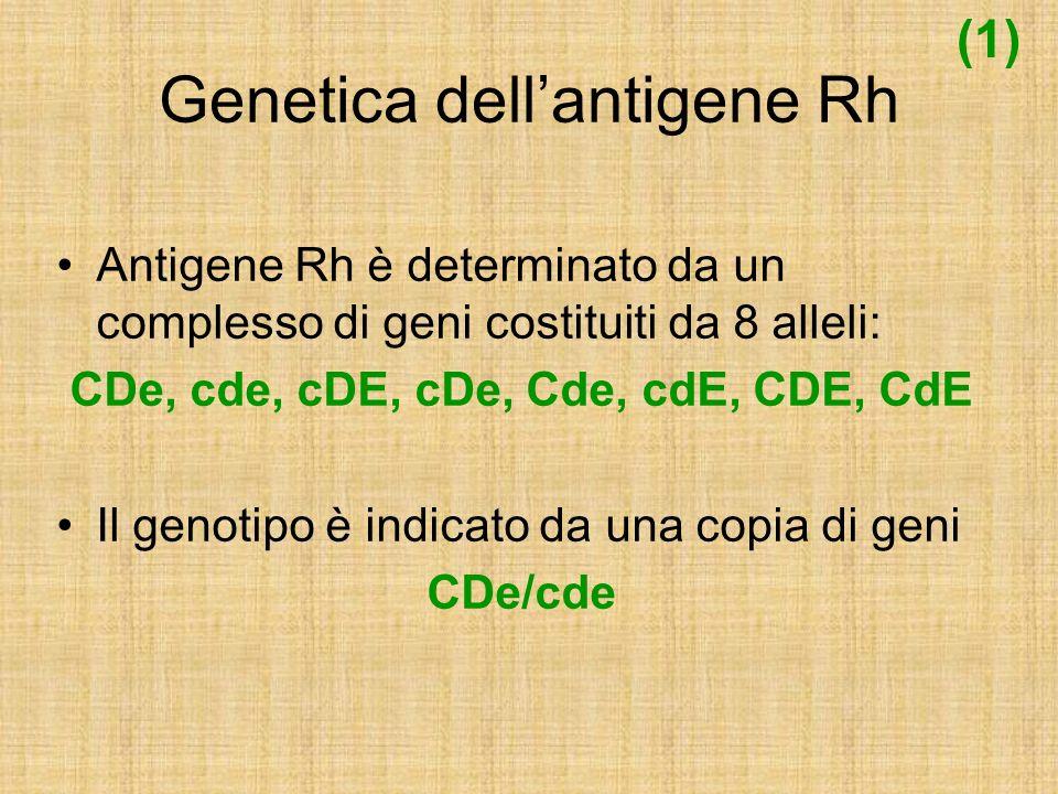 Genetica dellantigene Rh Antigene Rh è determinato da un complesso di geni costituiti da 8 alleli: CDe, cde, cDE, cDe, Cde, cdE, CDE, CdE Il genotipo