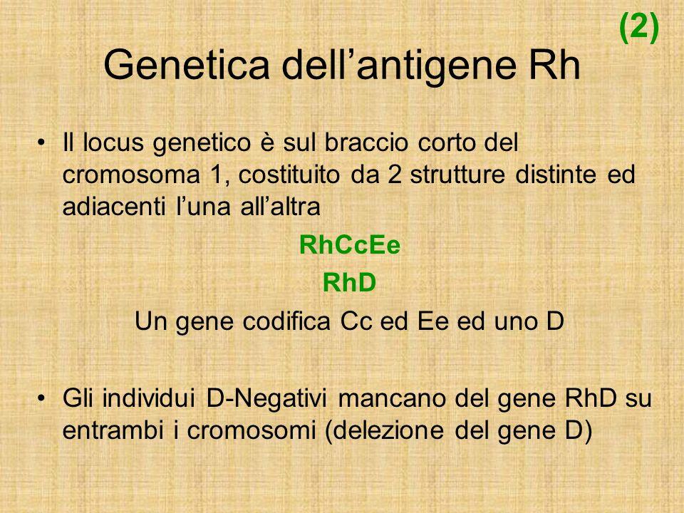 Genetica dellantigene Rh Il locus genetico è sul braccio corto del cromosoma 1, costituito da 2 strutture distinte ed adiacenti luna allaltra RhCcEe R