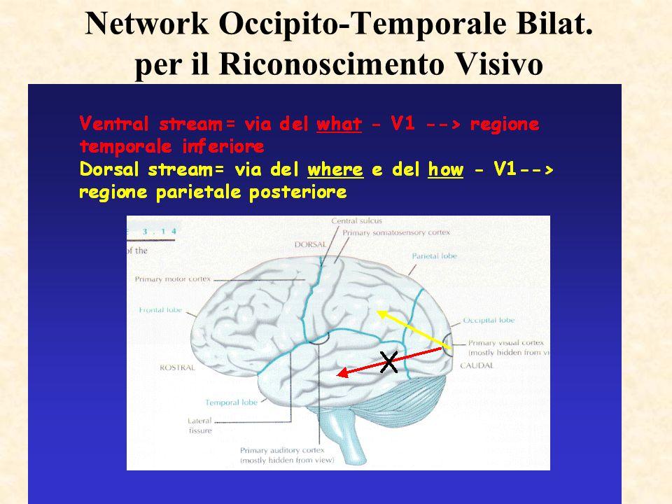 Network Occipito-Temporale Bilat. per il Riconoscimento Visivo