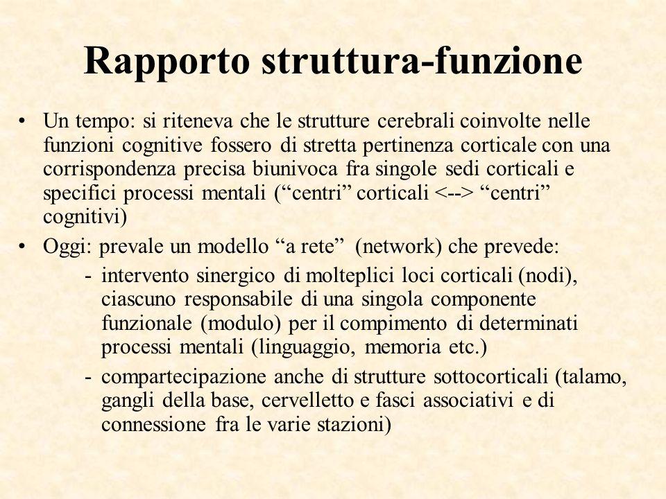 Rapporto struttura-funzione Un tempo: si riteneva che le strutture cerebrali coinvolte nelle funzioni cognitive fossero di stretta pertinenza cortical