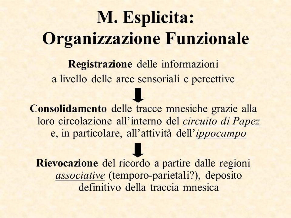 M. Esplicita: Organizzazione Funzionale Registrazione delle informazioni a livello delle aree sensoriali e percettive Consolidamento delle tracce mnes