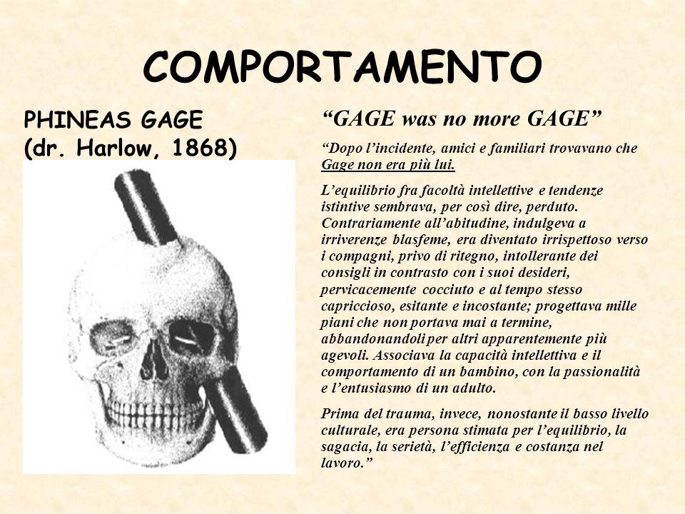 COMPORTAMENTO GAGE was no more GAGE Dopo lincidente, amici e familiari trovavano che Gage non era più lui. Lequilibrio fra facoltà intellettive e tend