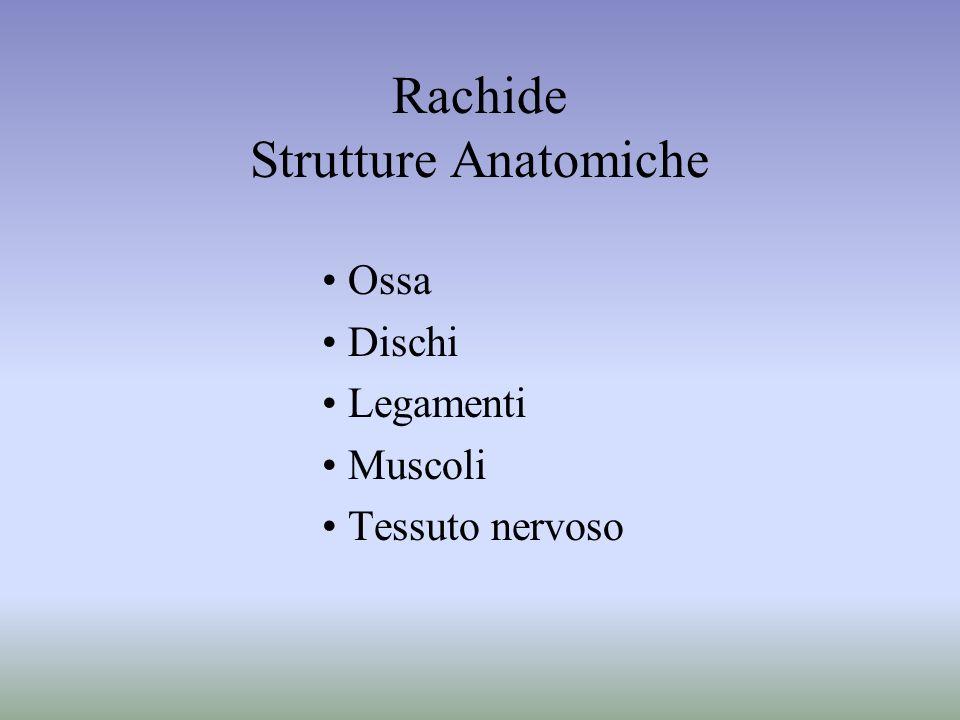 Rachide Strutture Anatomiche Ossa Dischi Legamenti Muscoli Tessuto nervoso