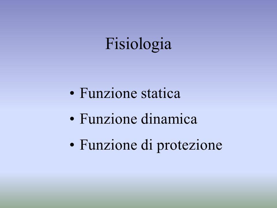 Fisiologia Funzione statica Funzione dinamica Funzione di protezione