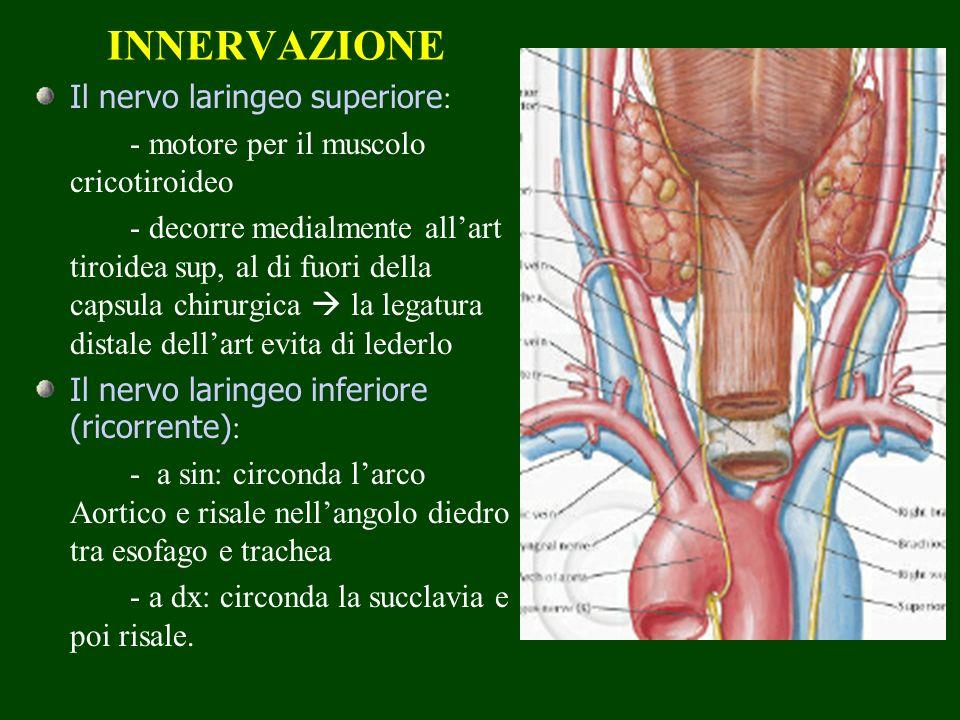 INNERVAZIONE Il nervo laringeo superiore : - motore per il muscolo cricotiroideo - decorre medialmente allart tiroidea sup, al di fuori della capsula