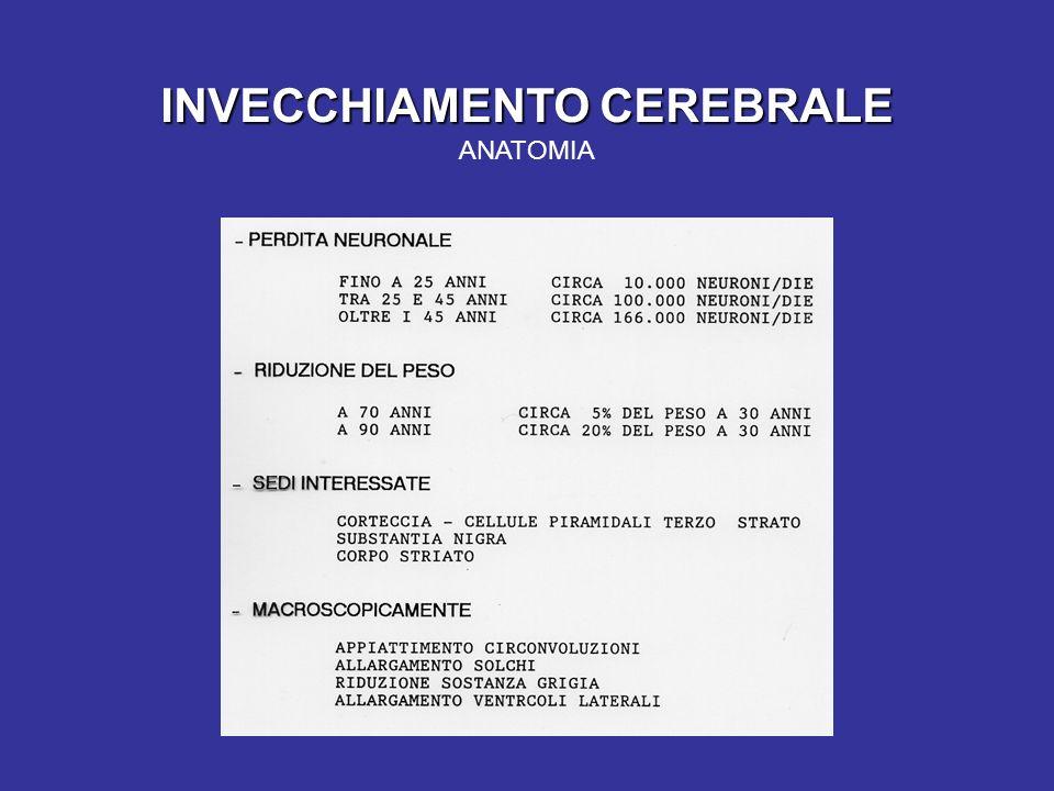 INVECCHIAMENTO CEREBRALE INVECCHIAMENTO CEREBRALE ANATOMIA
