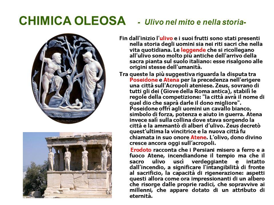 CHIMICA OLEOSA - Ulivo nel mito e nella storia- Fin dall'inizio l'ulivo e i suoi frutti sono stati presenti nella storia degli uomini sia nei riti sac