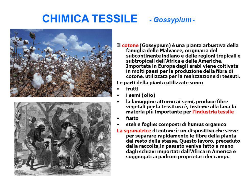 CHIMICA TESSILE - Gossypium - Il cotone (Gossypium) è una pianta arbustiva della famiglia delle Malvacee, originaria del subcontinente indiano e delle
