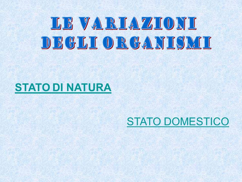 STATO DI NATURA STATO DOMESTICO