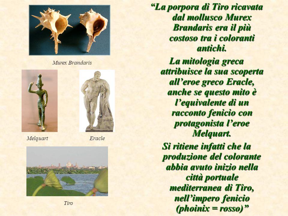 La porpora di Tiro era il più costoso tra i coloranti antichi.