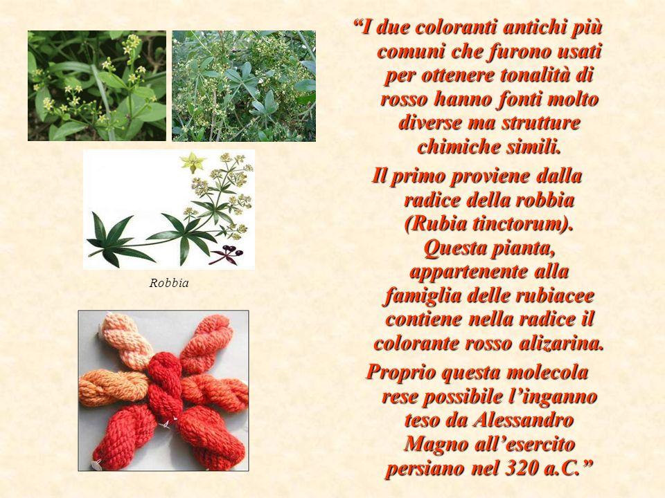 Un altro colorante di alizarina, noto come rosso di Turchia perché veniva estratto da una pianta coltivata da secoli nel Mediterraneo orientale, era usato dallesercito francese per tingere le giubbe dei soldati.