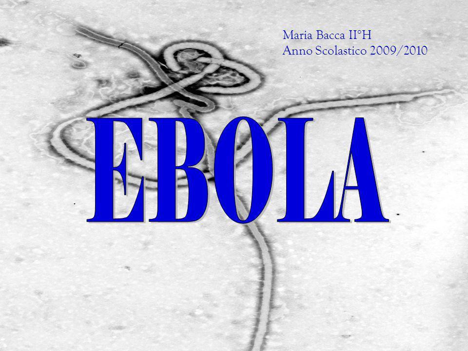 Maria Bacca II°H Anno Scolastico 2009/2010