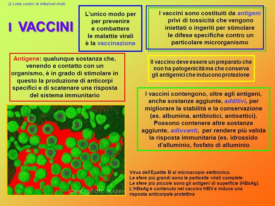 I VACCINI I vaccini sono costituiti da antigeni privi di tossicità che vengono iniettati o ingeriti per stimolare le difese specifiche contro un parti