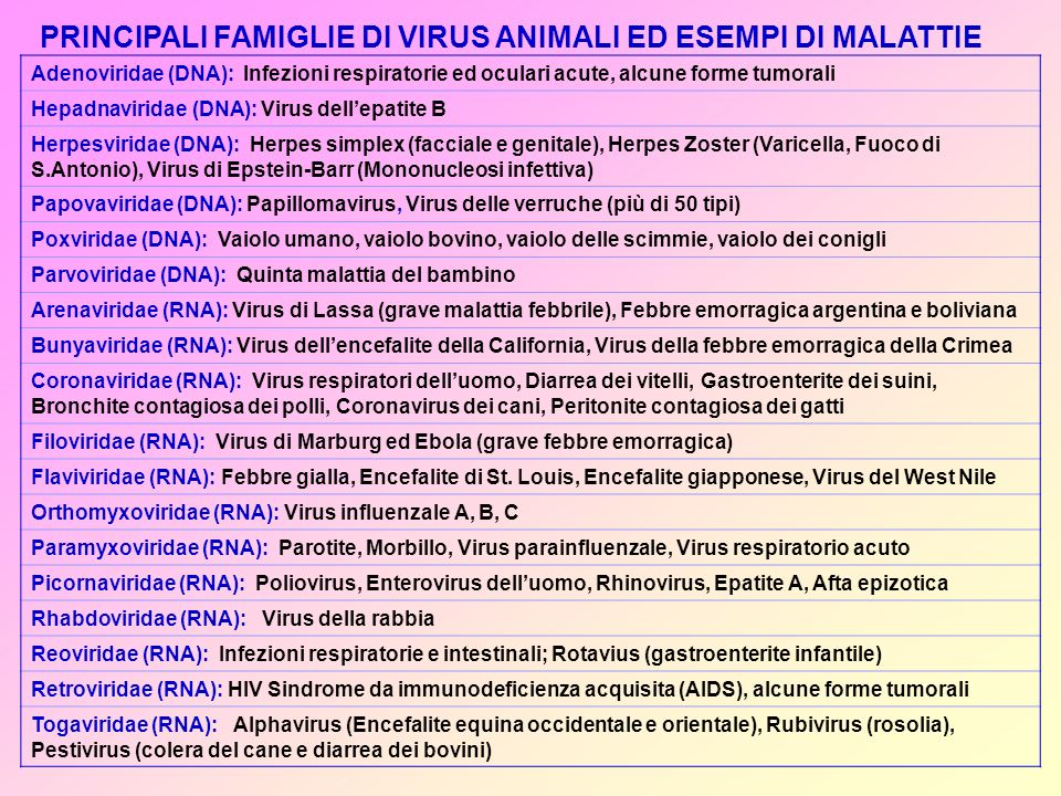 Adenoviridae (DNA): Infezioni respiratorie ed oculari acute, alcune forme tumorali Hepadnaviridae (DNA): Virus dellepatite B Herpesviridae (DNA): Herpes simplex (facciale e genitale), Herpes Zoster (Varicella, Fuoco di S.Antonio), Virus di Epstein-Barr (Mononucleosi infettiva) Papovaviridae (DNA): Papillomavirus, Virus delle verruche (più di 50 tipi) Poxviridae (DNA): Vaiolo umano, vaiolo bovino, vaiolo delle scimmie, vaiolo dei conigli Parvoviridae (DNA): Quinta malattia del bambino Arenaviridae (RNA): Virus di Lassa (grave malattia febbrile), Febbre emorragica argentina e boliviana Bunyaviridae (RNA): Virus dellencefalite della California, Virus della febbre emorragica della Crimea Coronaviridae (RNA): Virus respiratori delluomo, Diarrea dei vitelli, Gastroenterite dei suini, Bronchite contagiosa dei polli, Coronavirus dei cani, Peritonite contagiosa dei gatti Filoviridae (RNA): Virus di Marburg ed Ebola (grave febbre emorragica) Flaviviridae (RNA): Febbre gialla, Encefalite di St.