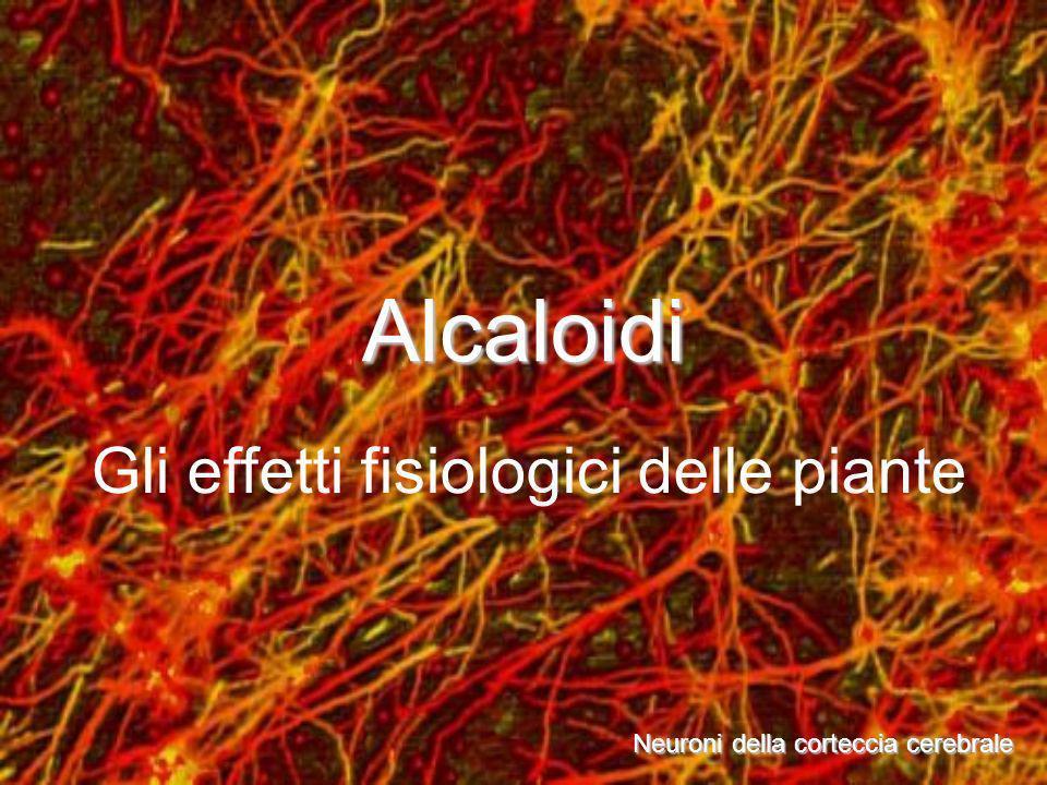 Alcaloidi Neuroni della corteccia cerebrale Gli effetti fisiologici delle piante