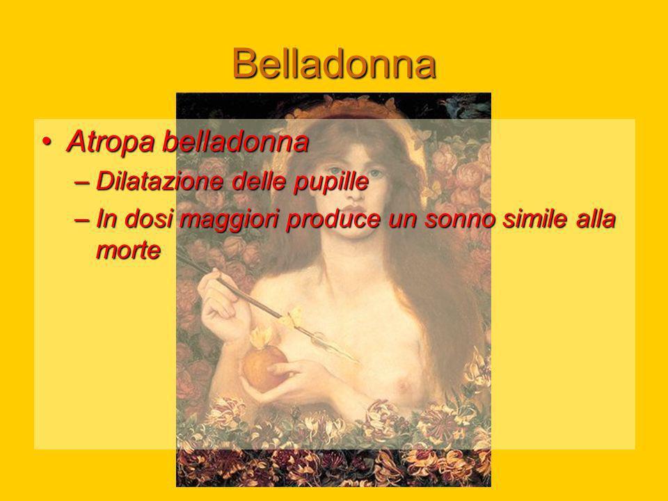 Belladonna Atropa belladonnaAtropa belladonna –Dilatazione delle pupille –In dosi maggiori produce un sonno simile alla morte