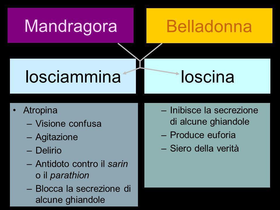 Mandragora Atropina –Visione confusa –Agitazione –Delirio –Antidoto contro il sarin o il parathion –Blocca la secrezione di alcune ghiandole Belladonn