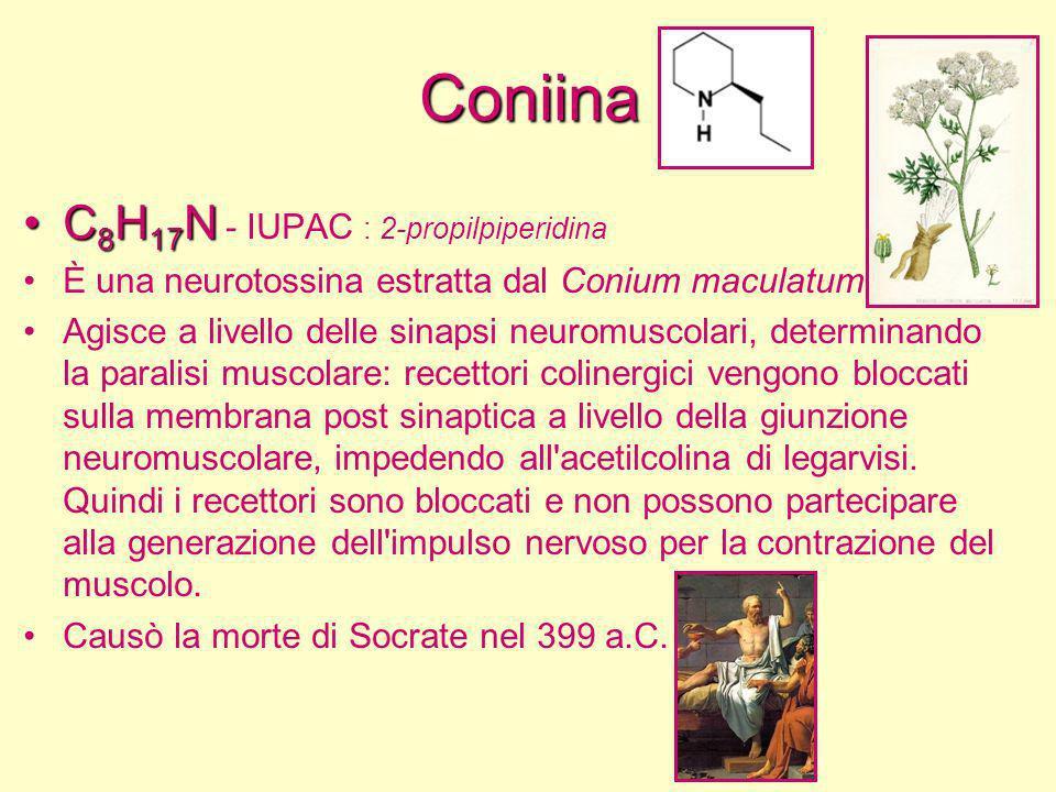 Coniina C 8 H 17 NC 8 H 17 N - IUPAC : 2-propilpiperidina È una neurotossina estratta dal Conium maculatum Agisce a livello delle sinapsi neuromuscola