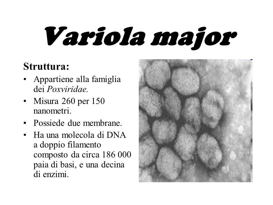 Variola vera Ci sono due forme cliniche di vaiolo che colpiscono gli esseri umani: Variola major, si manifesta con febbri elevate e con la comparsa di