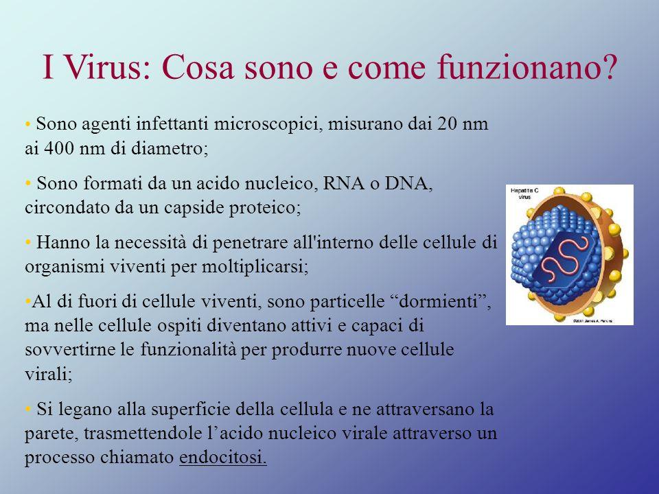 I Virus: Cosa sono e come funzionano? Sono agenti infettanti microscopici, misurano dai 20 nm ai 400 nm di diametro; Sono formati da un acido nucleico