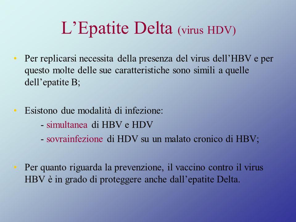 LEpatite Delta (virus HDV) Per replicarsi necessita della presenza del virus dellHBV e per questo molte delle sue caratteristiche sono simili a quelle